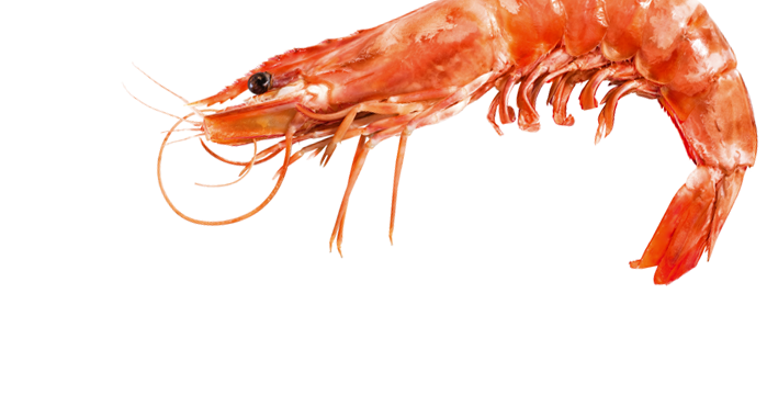 Photo PNG Shrimps