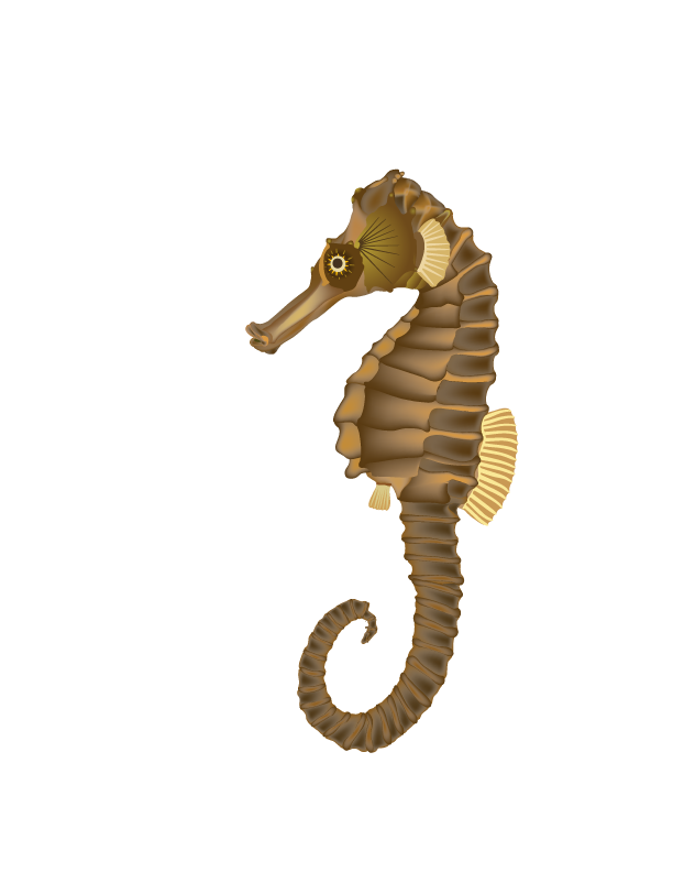 Png Format Images Of Seahorse image #24539