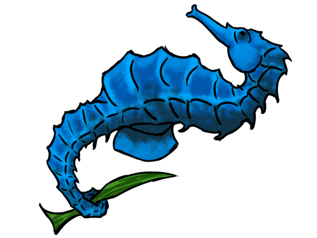 Browse And Download Seahorse Png Pictures