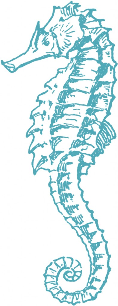 Clipart Collection Seahorse Png