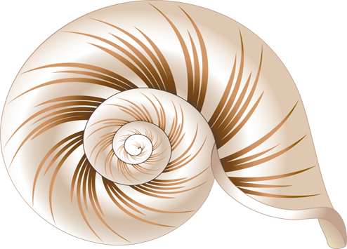 High Resolution Seashell Png Icon image #24613