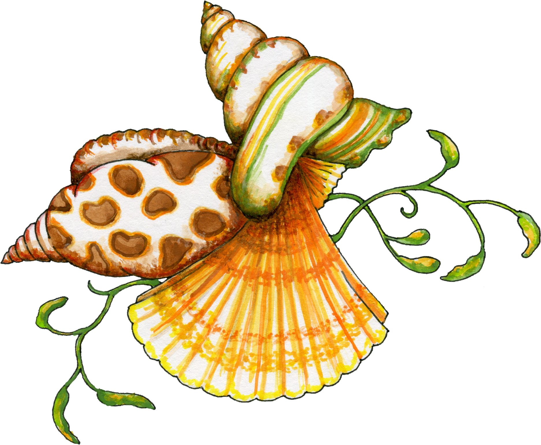 Free Download Seashell Png Images image #24619