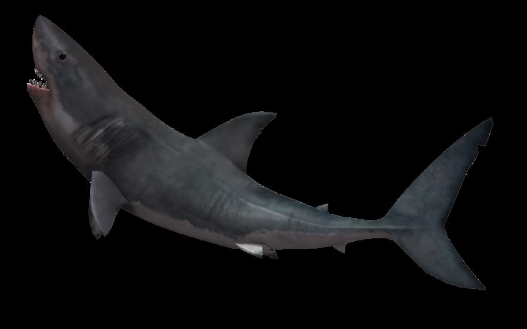 shark png  42735