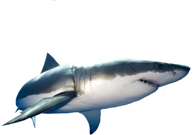 Png Format Images Of Shark image #42747