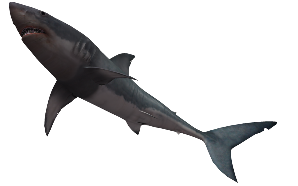 Shark Png Clipart image #42742