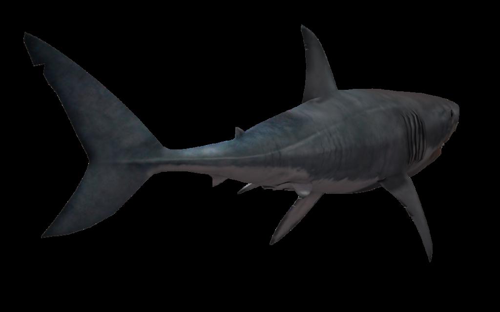 Shark Png Image