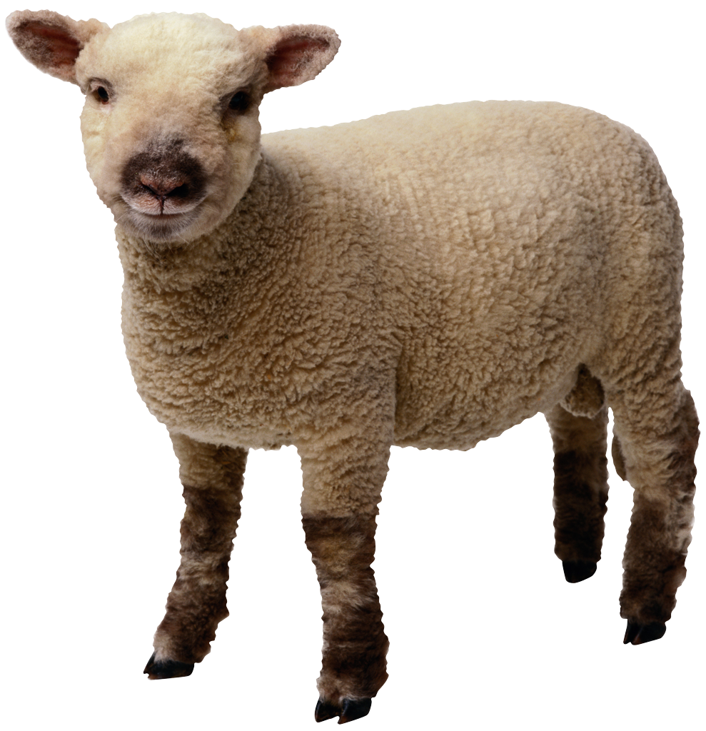 High-quality Sheep Cliparts For Free! image #23152