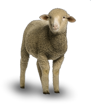 Sheep Png Available In Different Size image #23170