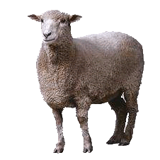 PNG Sheep Image Transparent image #23172