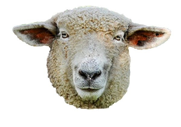 Use These Sheep Vector Clipart image #23182