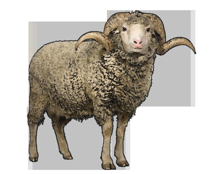 Sheep Art Clip