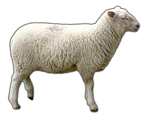 Download Free High-quality Sheep Png Transparent Images image #23158