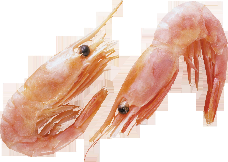 Shrimp Animal Png