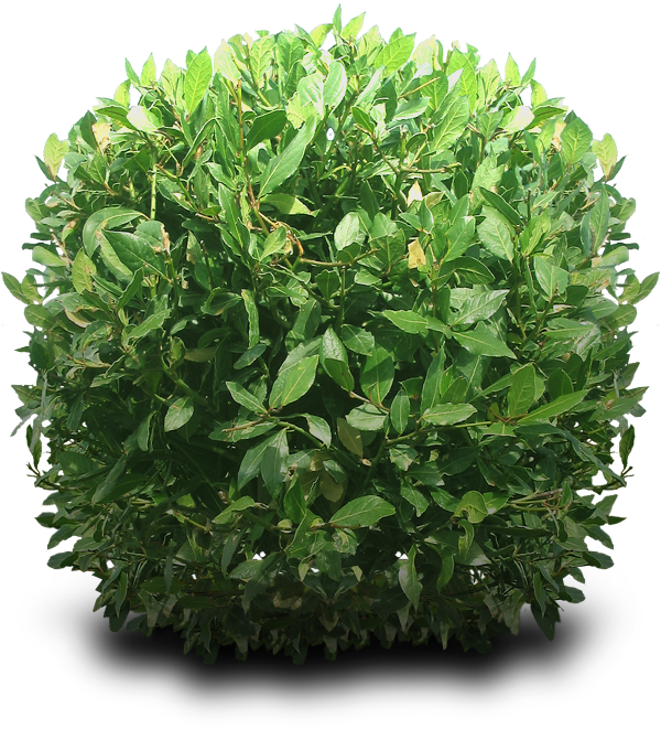 Shrub Png 2833 Free Icons And Png Backgrounds