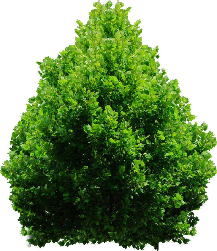 Christmas Trees Free Shipping