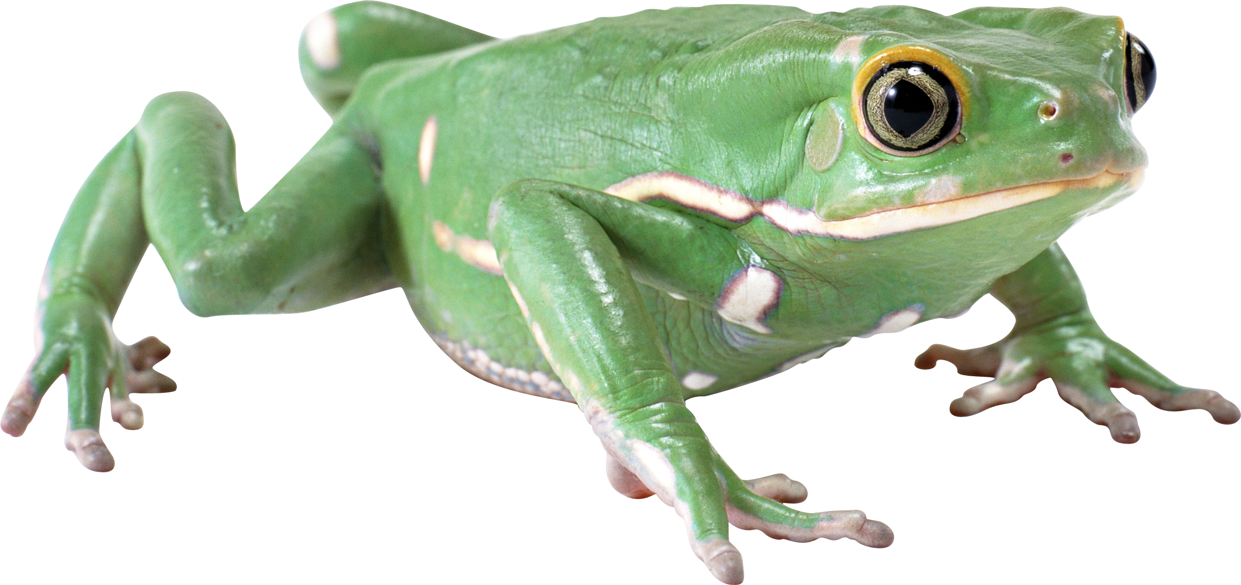 Simple Green Frog PNG image #43149