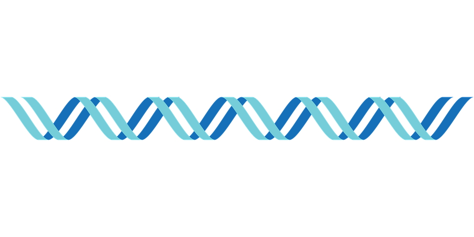 Single Strip Format Dna PNG Picture