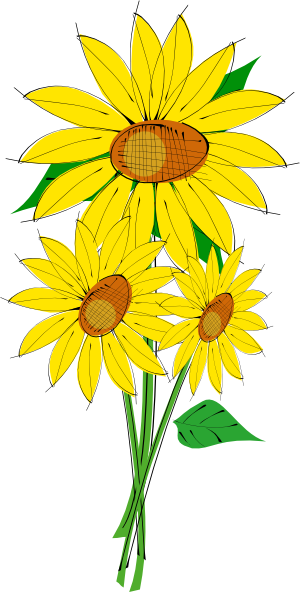 single sunflower png