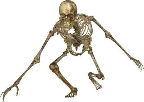 skeleton 049 png