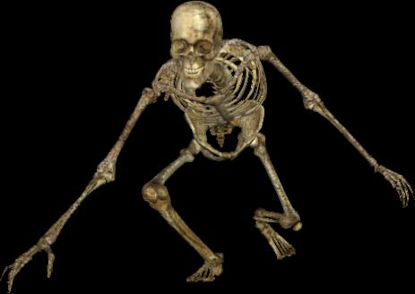 skeleton 049 png