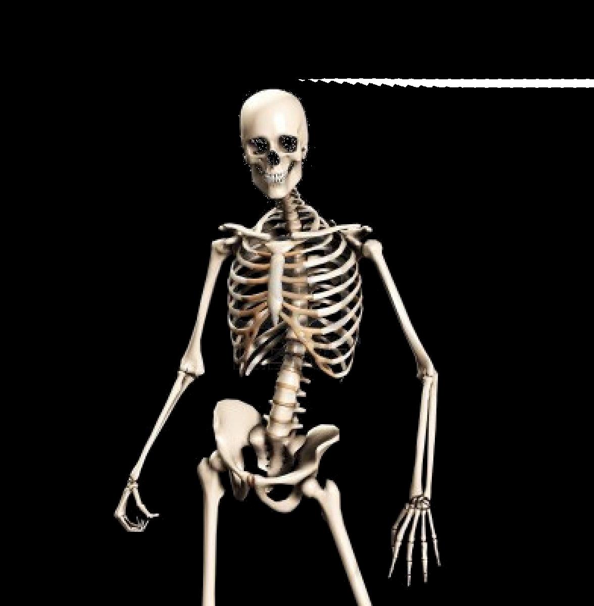 Skeleton, Bones, Anatomy, Human png