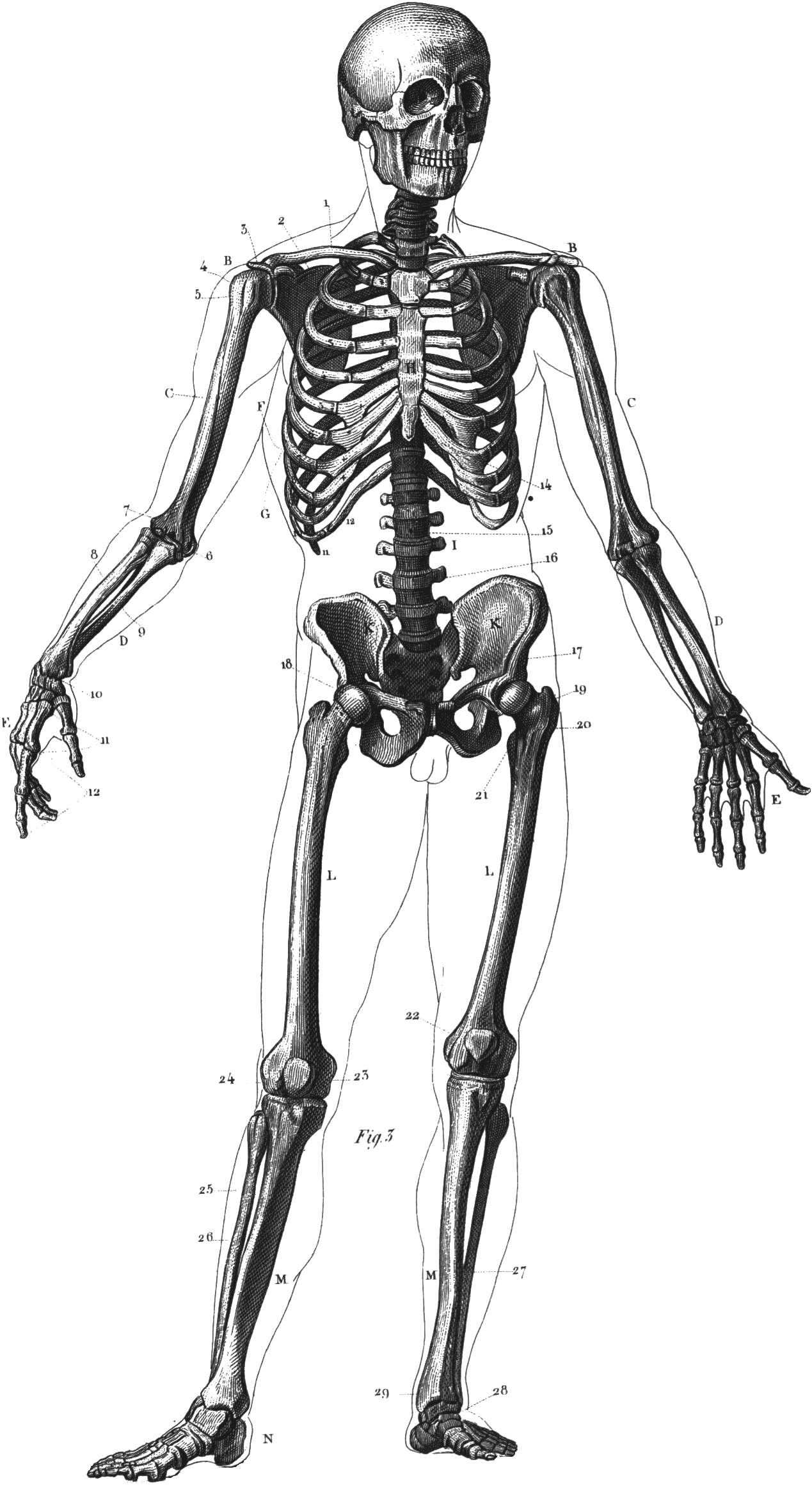 skeleton diag