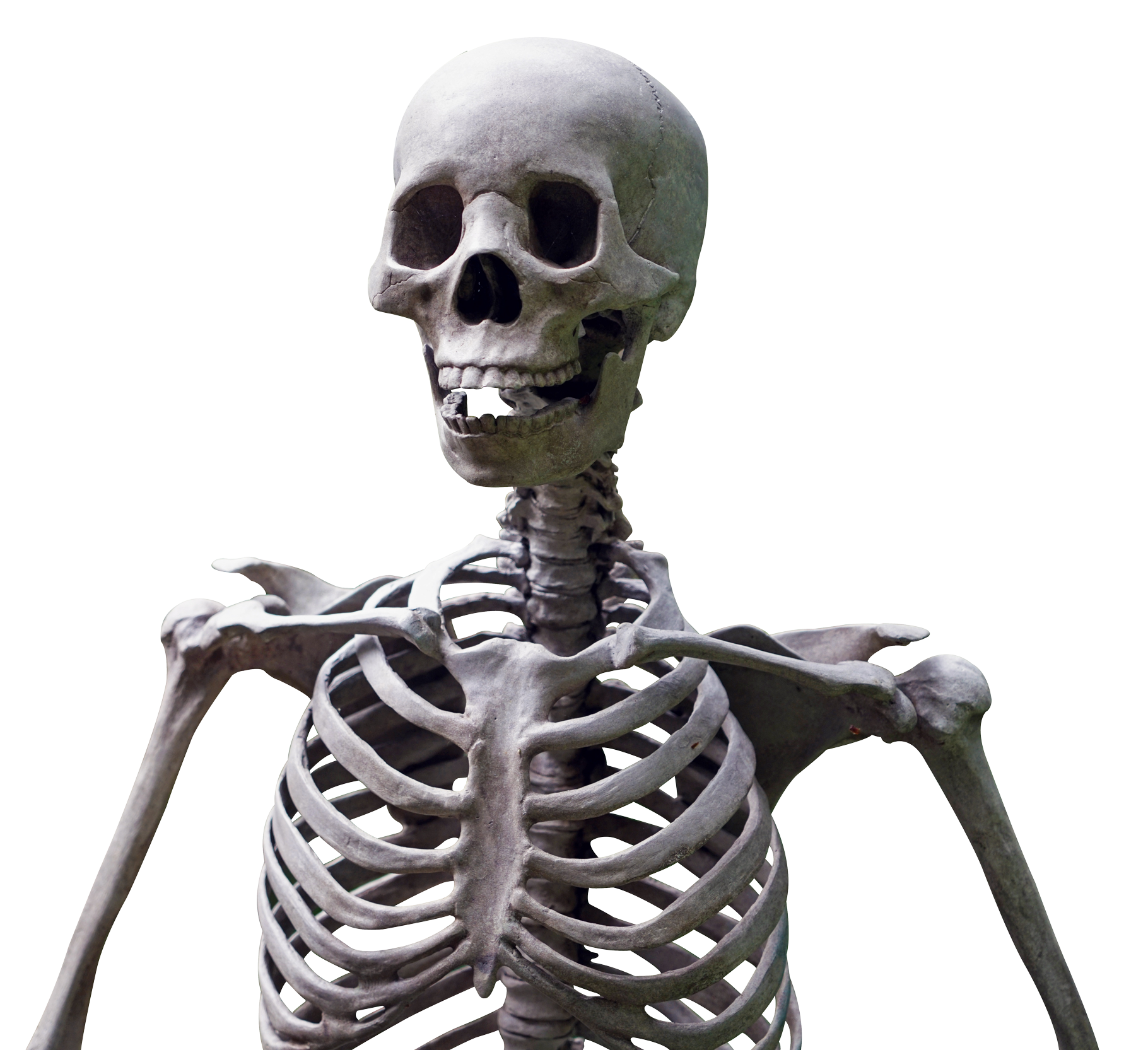 Skeleton Head PNG Transparent image #43844