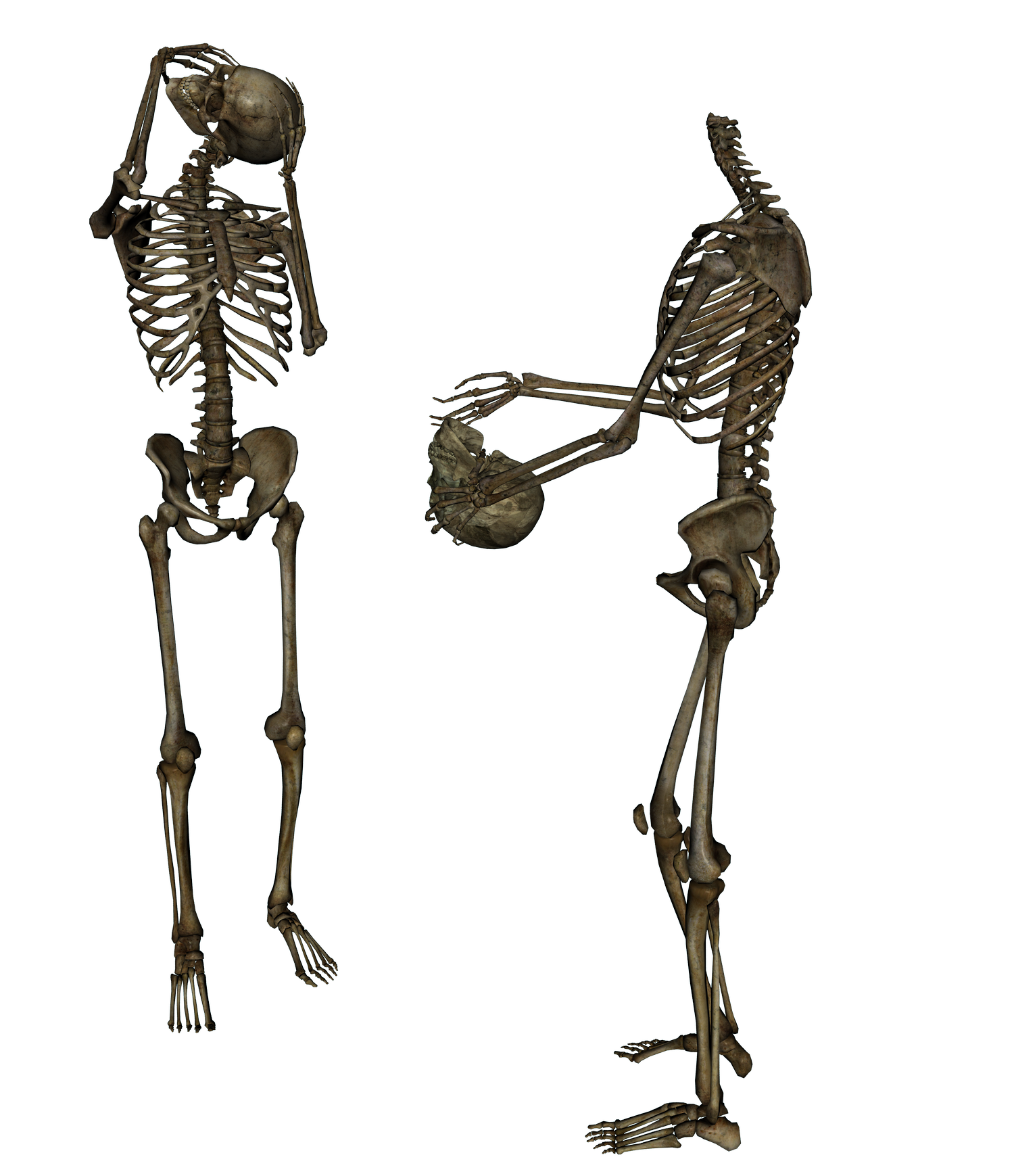Skeleton Head Trade Png image #43855