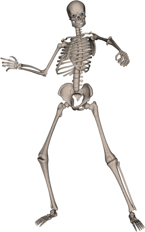 Skeleton PNG Photo