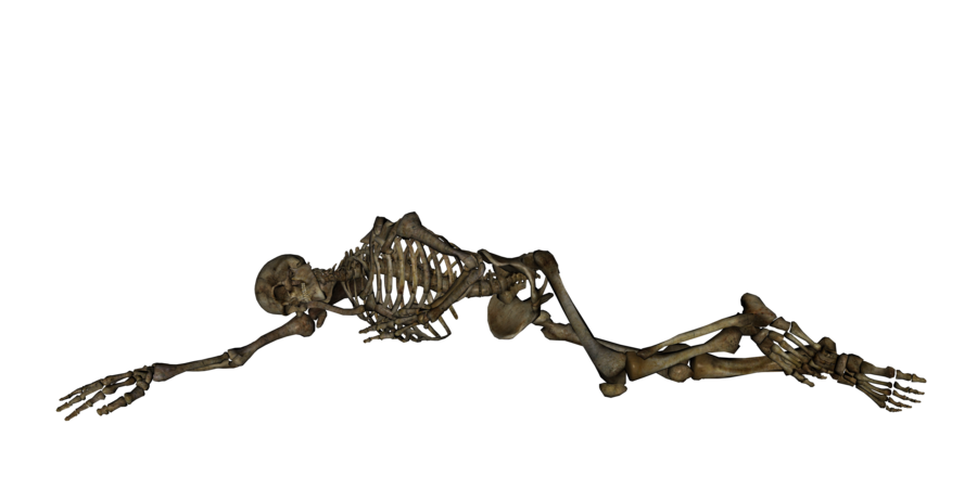 Skeleton PNG Transparent Pictures image #43845