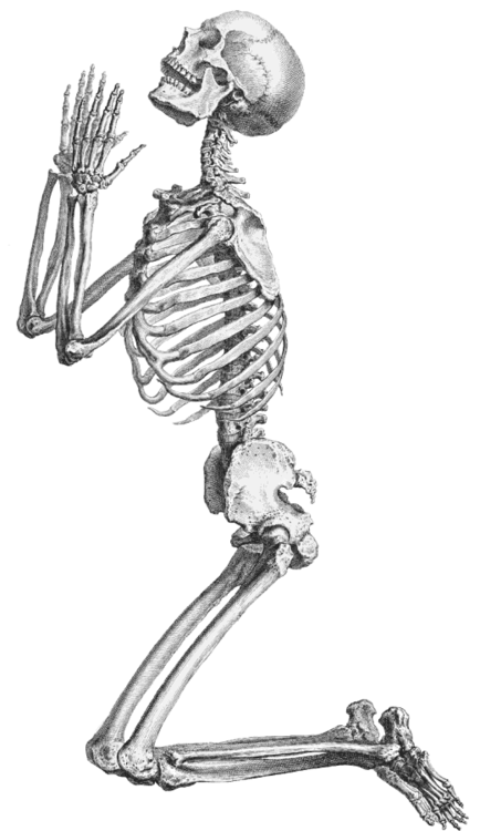 skeleton  skull and transparent  5340