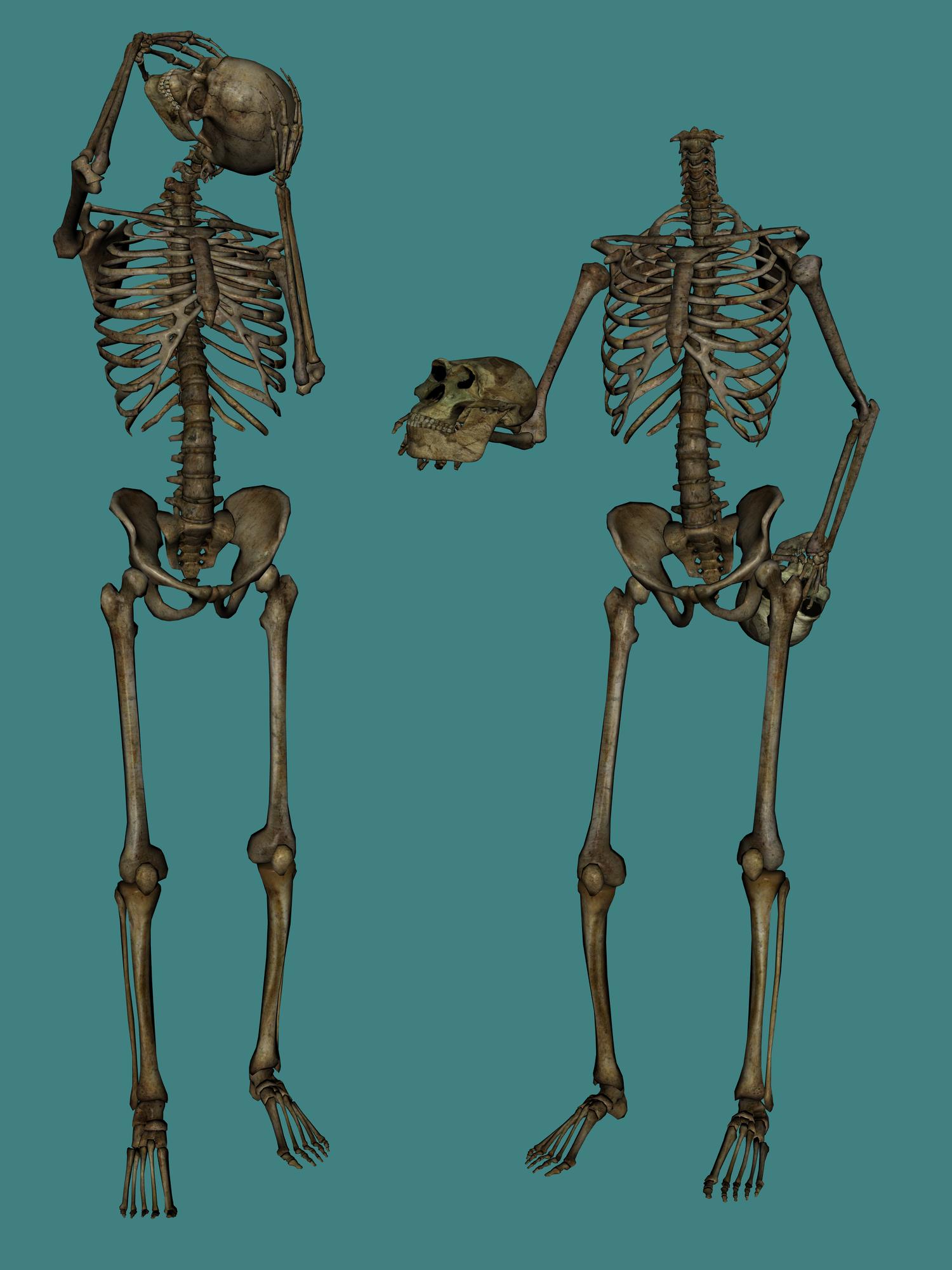 Skulls, Skeleton PNG image