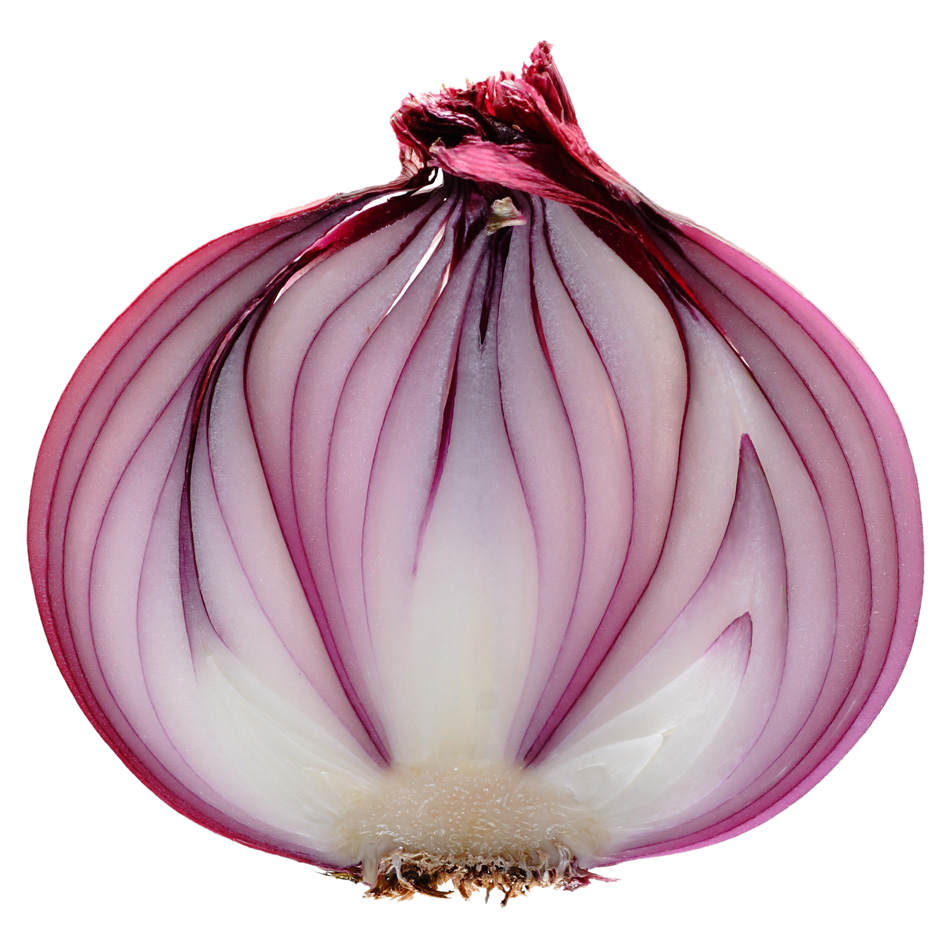 Slice Onion Png image #38756