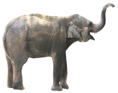 Small Animal Elephant Png