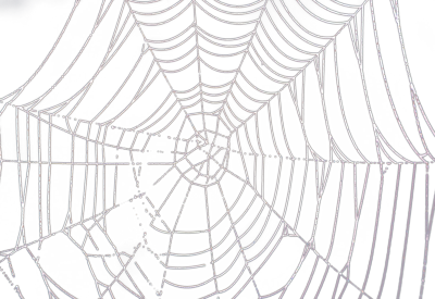 High-quality Spider Web