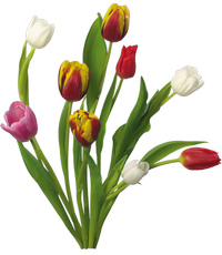 Spring Bouquets Tulips Free Png image #43162