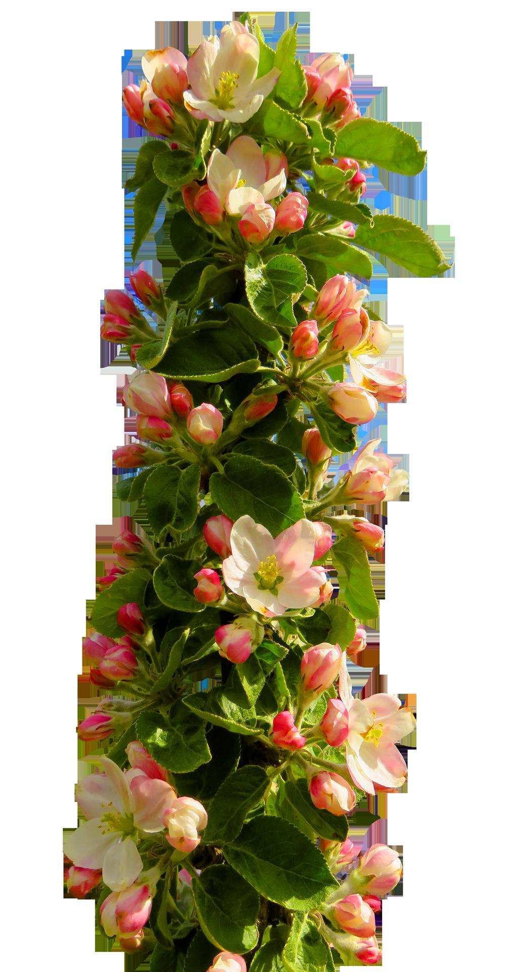 Spring Flower PNG Transparent