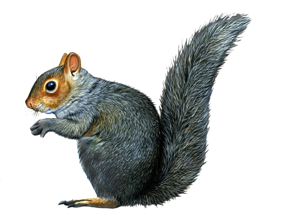 Download For Free Squirrel Png In High Resolution image #20484