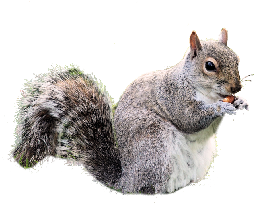 Free Download Squirrel Png Images image #20485