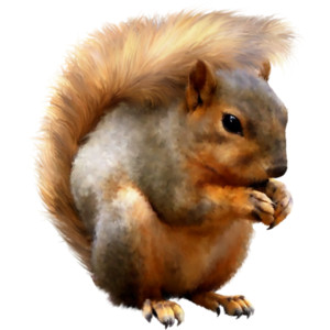 Browse And Download Squirrel Png Pictures