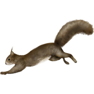Png Squirrel Background Transparent