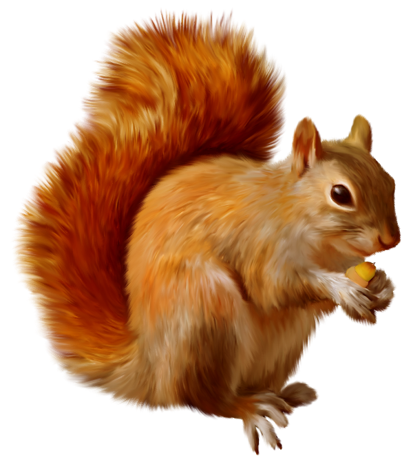 Download Free High-quality Squirrel Png Transparent Images image #20492