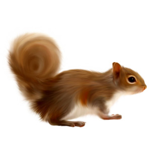 Free Download Squirrel Png Images