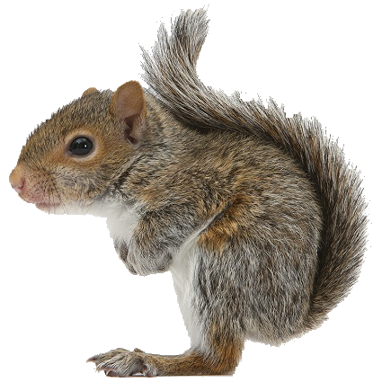 Squirrel Png Available In Different Size image #20472