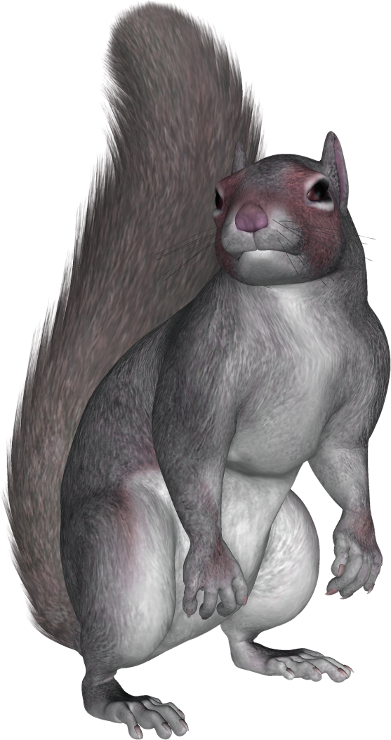 Download For Free Squirrel Png In High Resolution image #20499