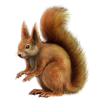 File PNG Squirrel image #20475