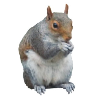Collections Best Png Image Squirrel image #20476
