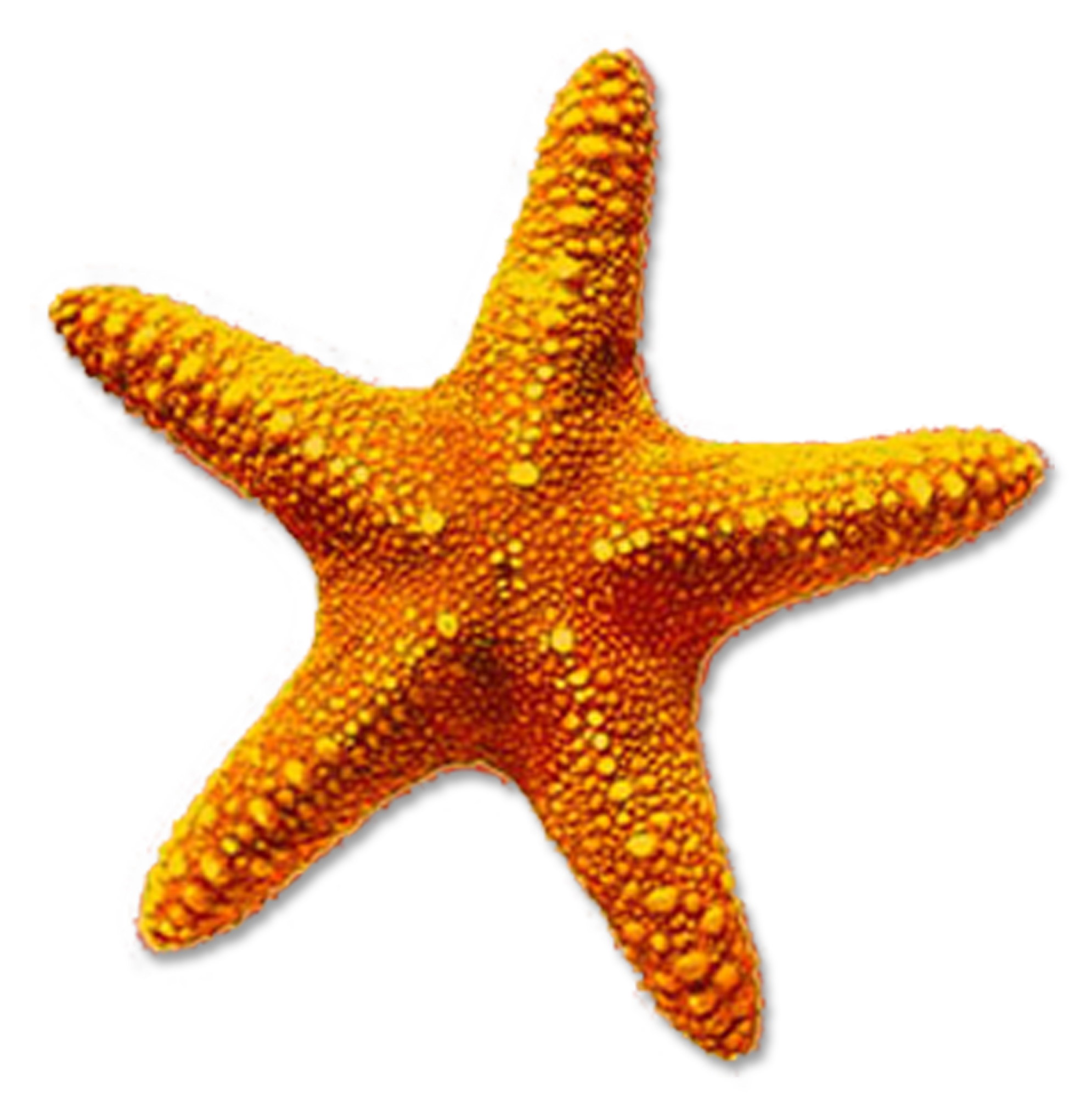 High-quality Starfish Cliparts For Free! image #19850