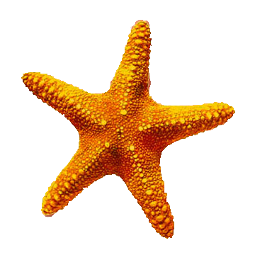 Download Starfish Latest Version 2018 image #19858
