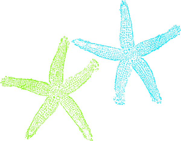 Download For Free Starfish Png In High Resolution image #19870